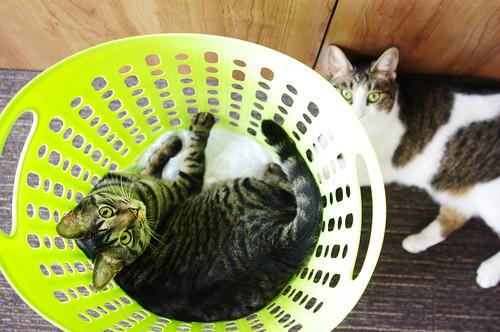 Koharu & Moco
