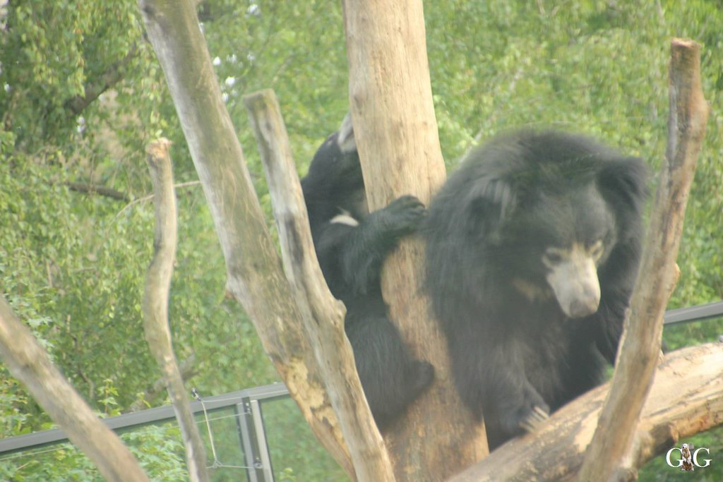 Zoo Besuch 11.07.201758