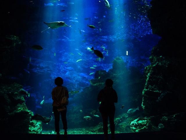 20170718_kyoto_aquarium-13