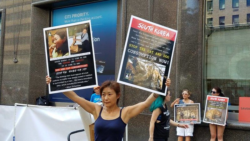 The Animals' Battalion 'Boknal' Demo at the New York Korean Consulate July 12, 2017