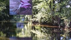 Une facon originale de présenté une exposition d'un peintre animalier en accrochant les peintures dans les arbre au dessus de la riviere