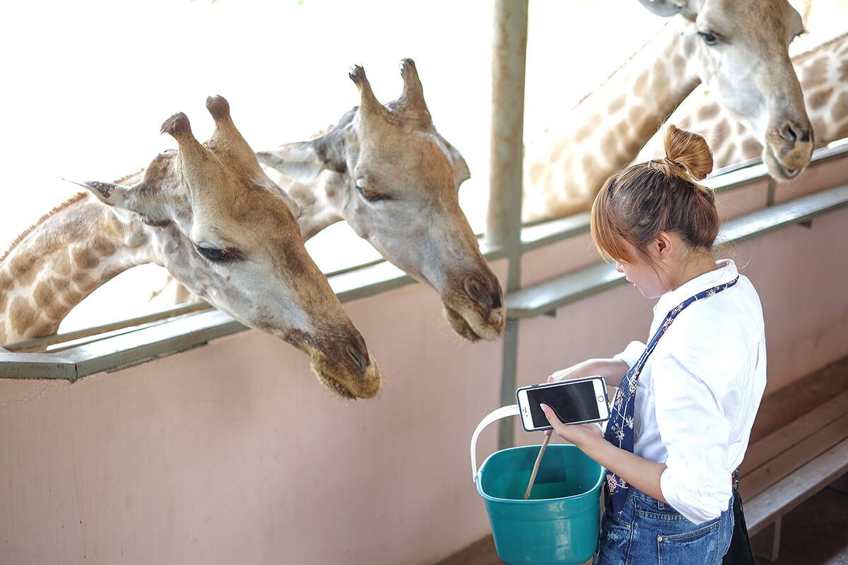 Safari World Bangkok, Thailand