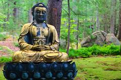 A DI DA PHAT QUAN THE AM BO TAT DAI THE CHI BO TAT GUANYIN KWANYIN BUDDHA 9599