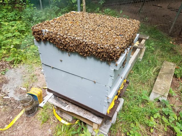full_hive