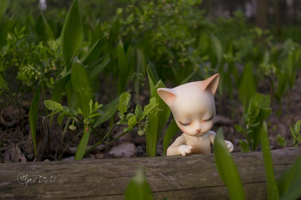 170526 Kitty 03