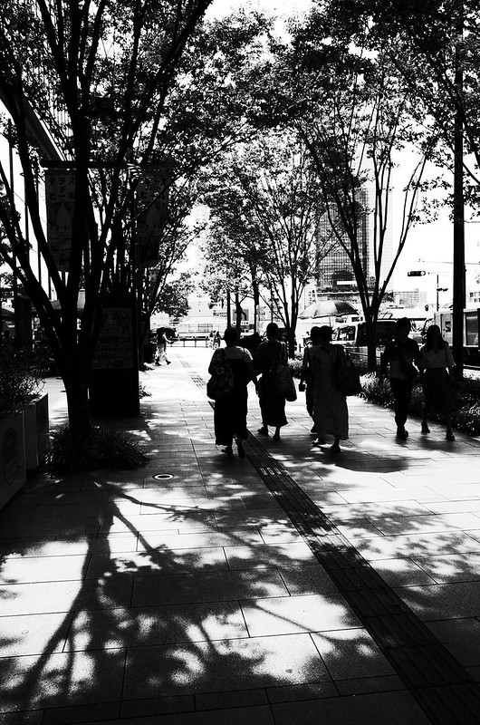 街路樹の木陰