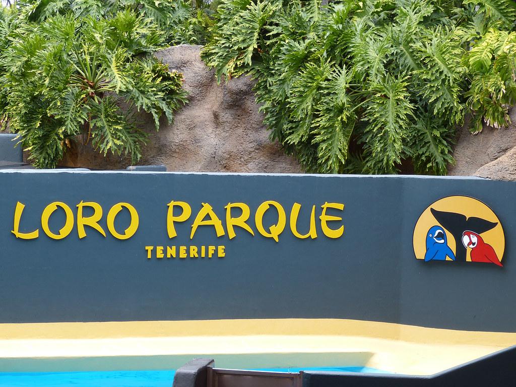 2017 Teneriffa - Puerto Cruz - Loro Parque
