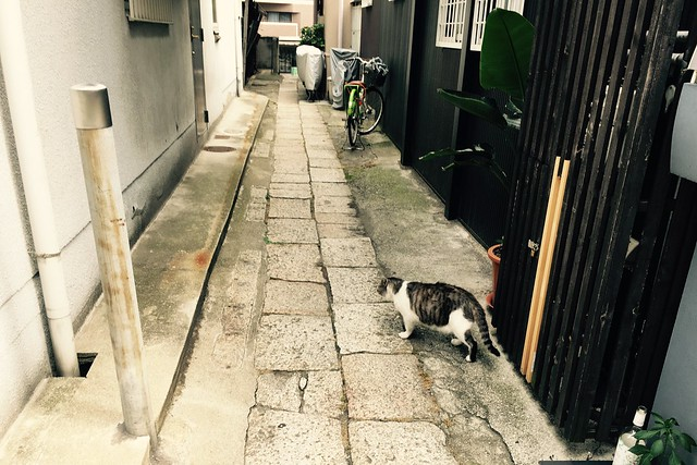 Today's Cat@2017-07-19