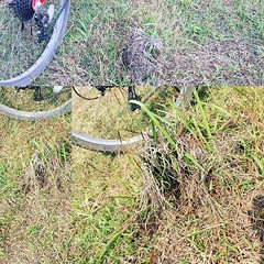 Hampir melindas sarang burung di rerumputan :expressionless:. Almost stepping on #bird #nest on the #grass while #cycling in #landscape using #polygon #bicycle .