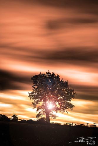 Sunset tree.