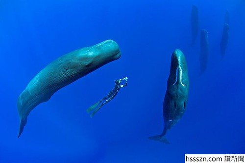 sperm-whales-sleep-franco-banfi-2-5968931f1da2a__700_700_467