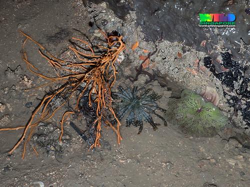 Various marine life at Pulau Ubin's rocky shores