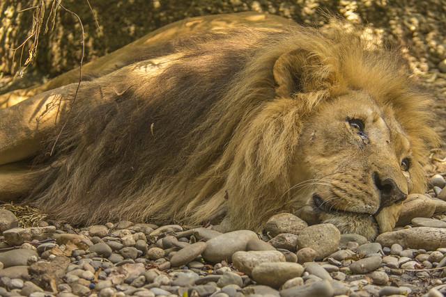 Mbali - African Etosha, Nikon D7200, AF VR Zoom-Nikkor 80-400mm f/4.5-5.6D ED