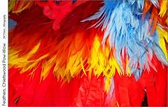 Feathers, Chiefswood Pow-Wow