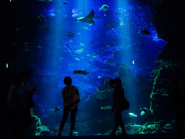 20170718_kyoto_aquarium-14
