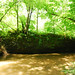 Small photo of Along the Creek