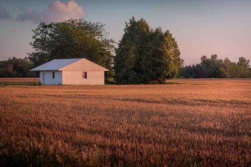 canoneos5dmarkiv canon wheatfield wheat field farm farmfield sundown evening atardecer sunset mi michigan midmichigan sunny lowlight