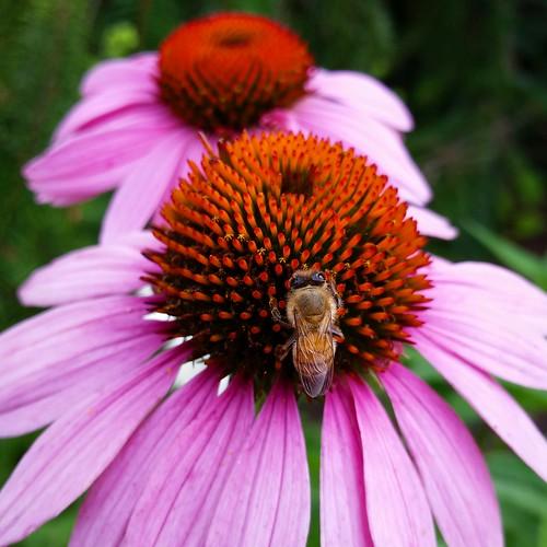 Bee! Photographer Joann Kraft