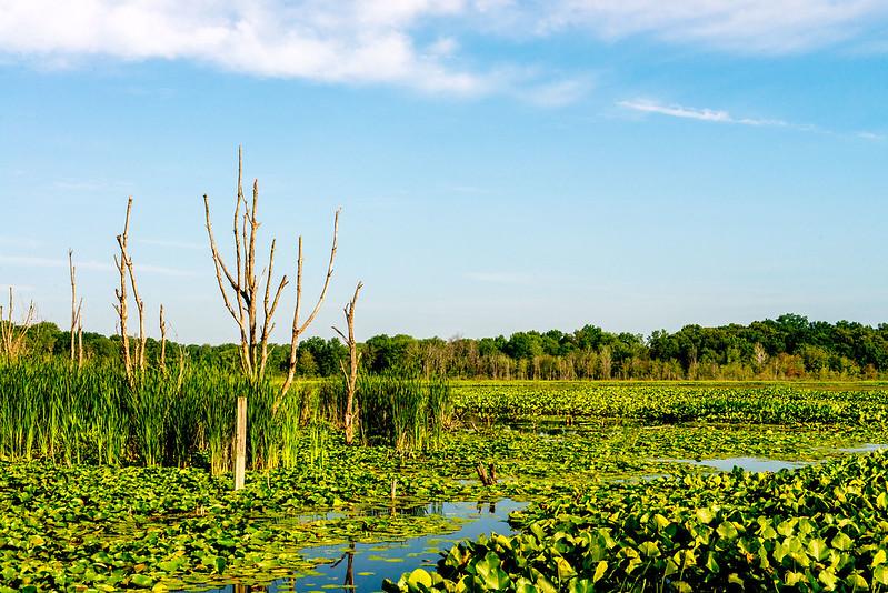 Round Lake Wetland Conservation Area - July 18, 2017