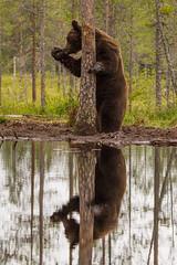Whispering bear