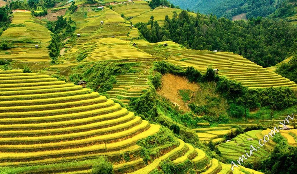 Phong canh dep nui rung viet nam chat luong cao AmiA