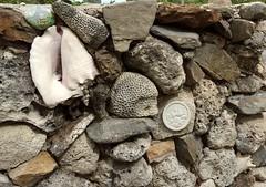 Hedgehog shaped coral