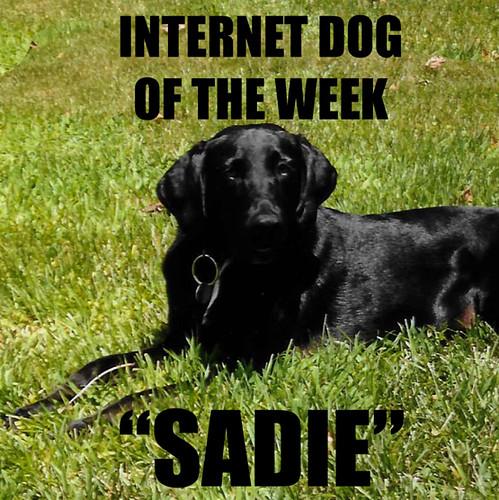 IKOTW Sadie