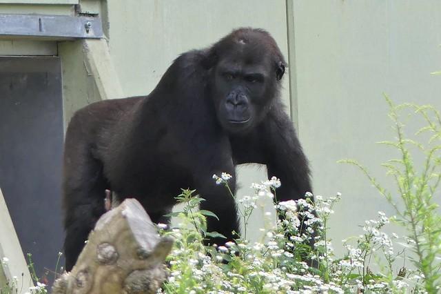 Quembo, Zoo Frankfurt
