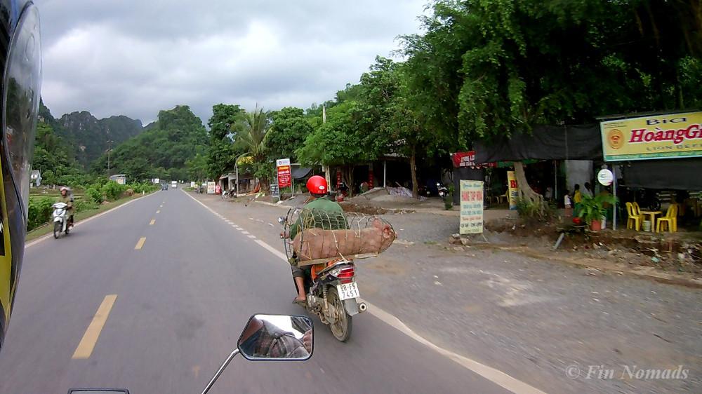 vietnam motorbike pig