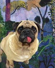 """""""Some days I'ms in my own little 🌎world. But, at least I knows everyone there!"""" Pugsley Luigi  #pug #dog #world #crazy #safe #friends #alone #happy #friendship #painting #forest #peace #woods"""