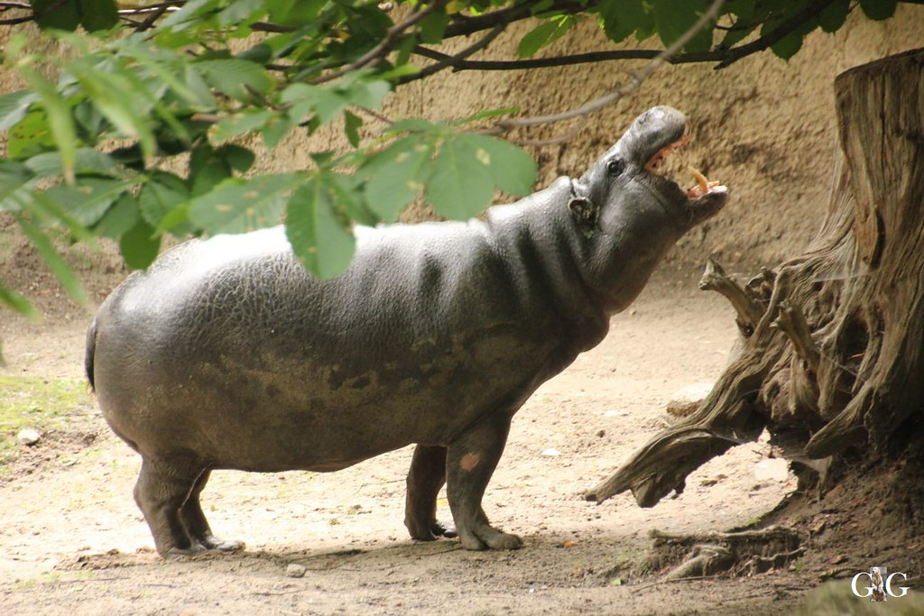 Zoo Besuch 11.07.201728