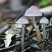 Mushrooms, Mangorewa Track near Rotorua, NZ
