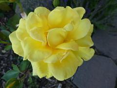 Flowers Missoula Montana RV Park (8)