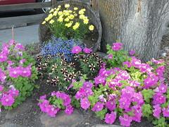 Flowers Missoula Montana RV Park  (2)
