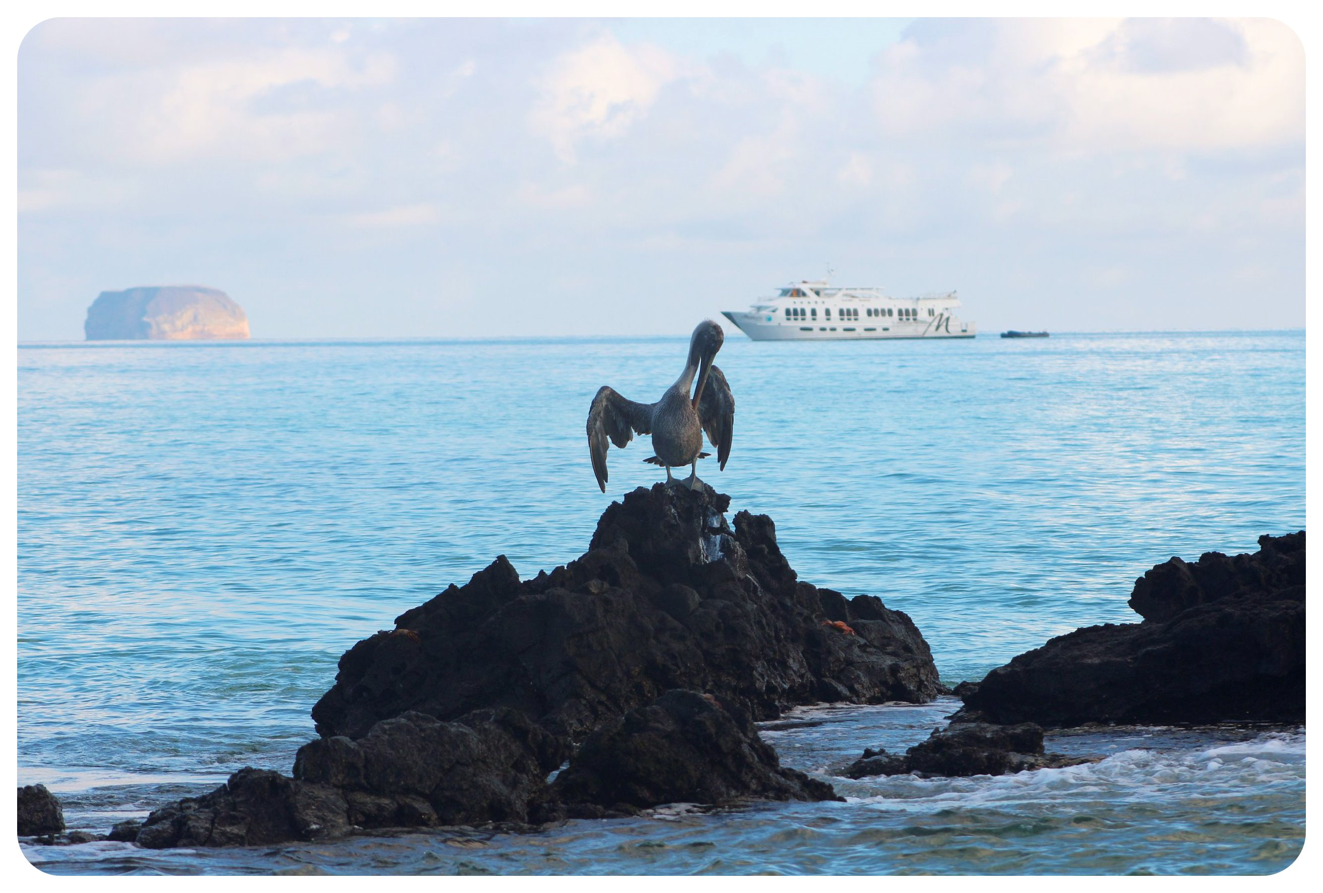 galapagos islands pelican and majestic yacht