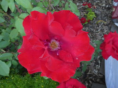 Flowers Missoula Montana RV Park (5)