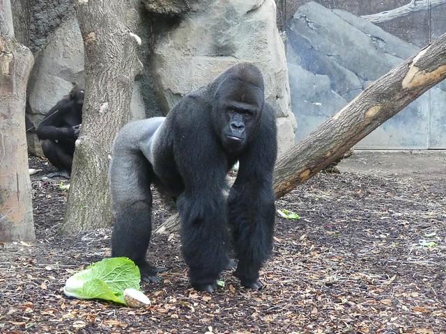 Viatu, Zoo Frankfurt