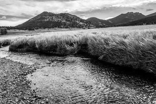 blackandwhite monochrome elk rut rockymountainnationalpark estespark colorado unitedstates us