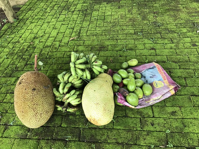 fruit harvest,  July 2017