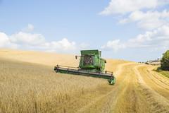 Barley Moving 205/365