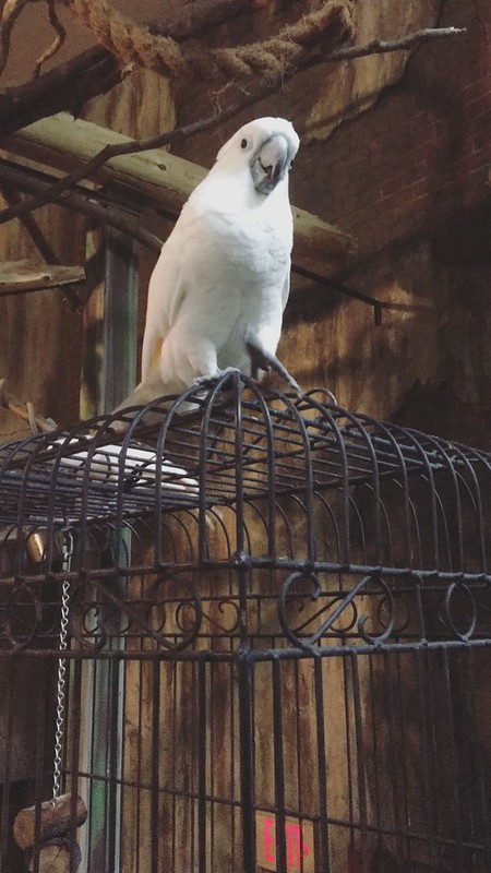 Bird Kingdom, Niagara Falls, Canada