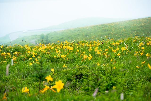 ビーナスラインの盛夏