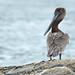 KyleWilmarth has added a photo to the pool:Hampton, NHebird.org/ebird/nh/view/checklist/S38372799