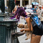 Barcelona - Dog