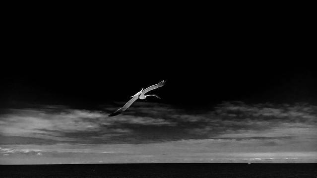 Dark Summer #delawarebeaches #capehenlopenstatepark #Flickr