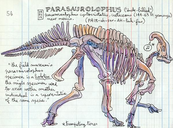 parasoraulophus holotype