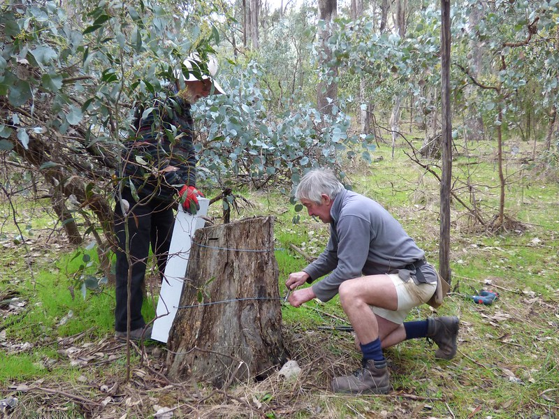 Placing a Turquoise Parrot Box