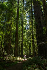 Humboldt Redwoods State Park - Mahan Plaque Trail - Coastal Redwood