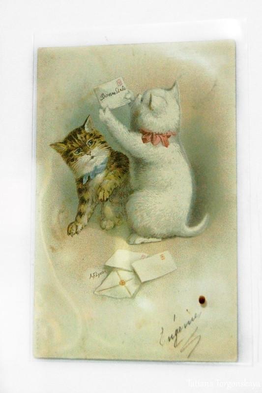 Открытка с котами