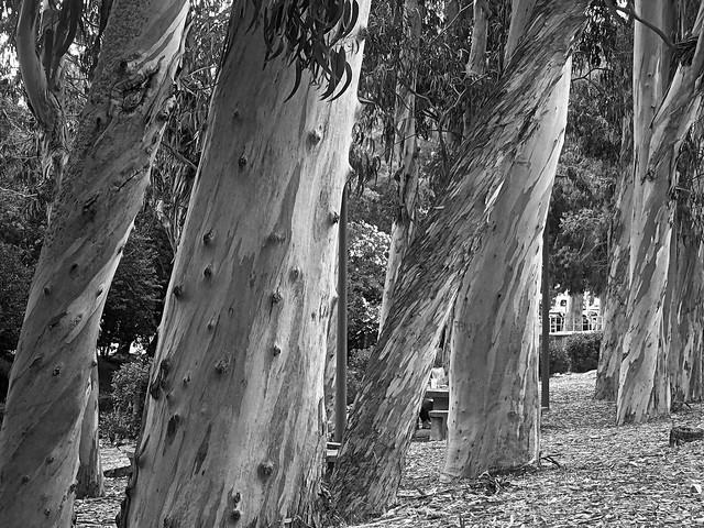Trees, Nikon COOLPIX S6900